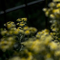暈けの波間に咲く花