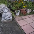 Photos: 正座する象、そして妖精の様な招き猫たち(爆)