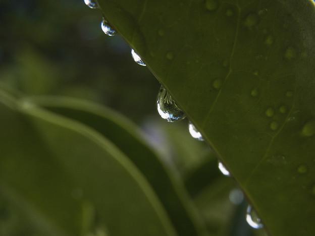 Photos: 梅雨の一コマ