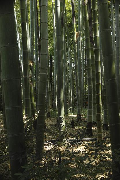 竹林のなかの陽光