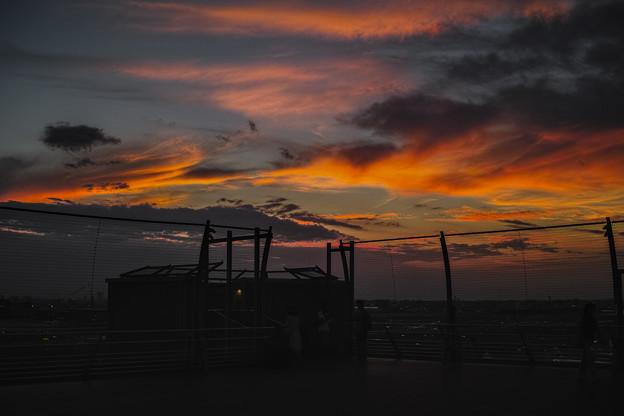 Photos: 羽田空港の夕陽