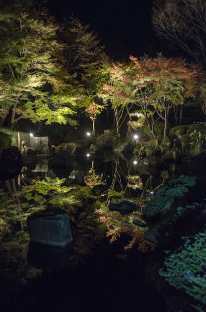 池の反映@紅葉ライトアップ@神奈川県の大磯