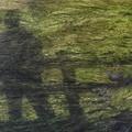 Photos: 藻に映る影