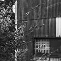 Photos: 造形を施した窓(爆)