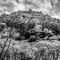 Photos: ふりかけの雪