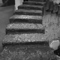 Photos: 猫の為の階段(爆)