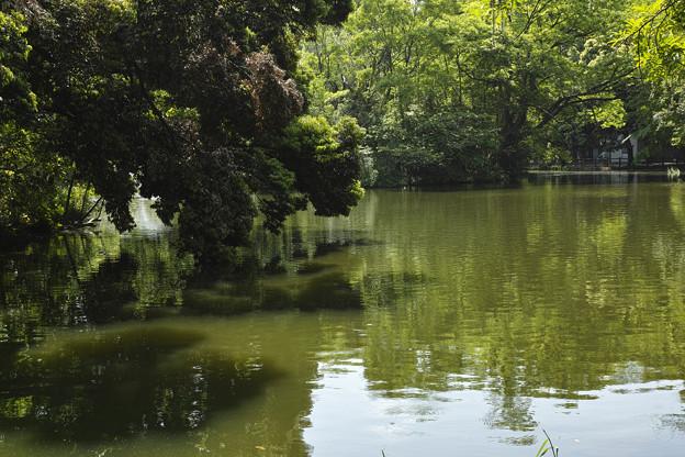 池の畔を散歩するわんちゃん