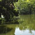 Photos: 池の畔を散歩するわんちゃん