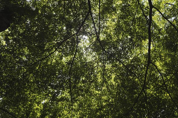 新緑を透す光
