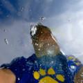 Photos: 魚が巧く撮れないから水中からセルフィー(爆)