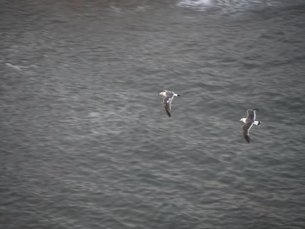 Photos: 飛ぶ、飛ぶ、、海上、、あ、これこそ東京海上(爆)