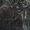 魔法の森(爆)