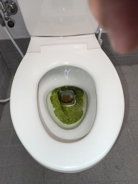 こ、苔がこんなところに!