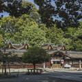 Photos: 京都平野神社本殿2