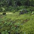 苔庭の朝、、