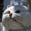 Photos: 石猫2