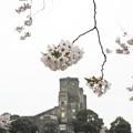 Photos: 廃墟と桜