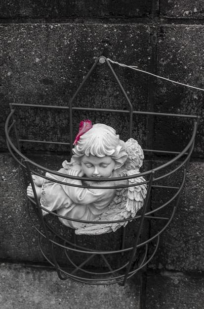 Photos: 天使には花が似合う