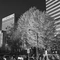 Photos: 晩秋の御茶ノ水