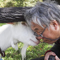 Photos: ねえねえ、なんで羊の野郎にはあって、山羊年ってないの?