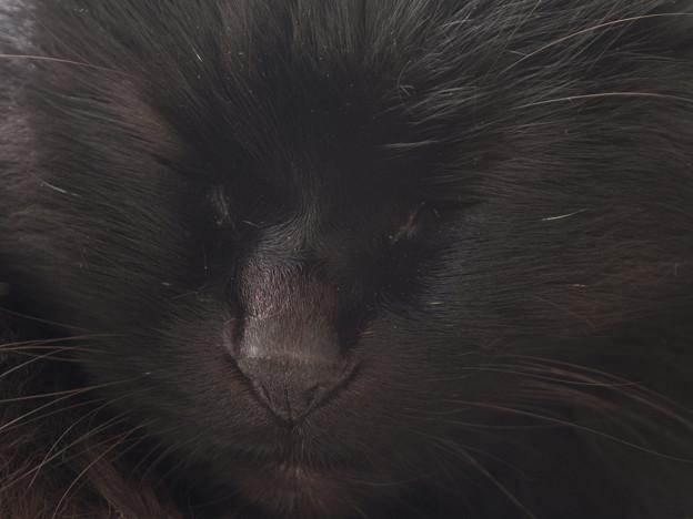 黒豹の微睡み(嘘)