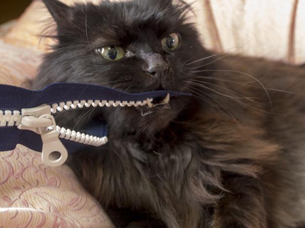 第92回モノコン@ファスナー鰐 vs 黒猫 生き残りを賭けた戦い