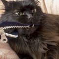 Photos: 第92回モノコン@ファスナー鰐 vs 黒猫 生き残りを賭けた戦い