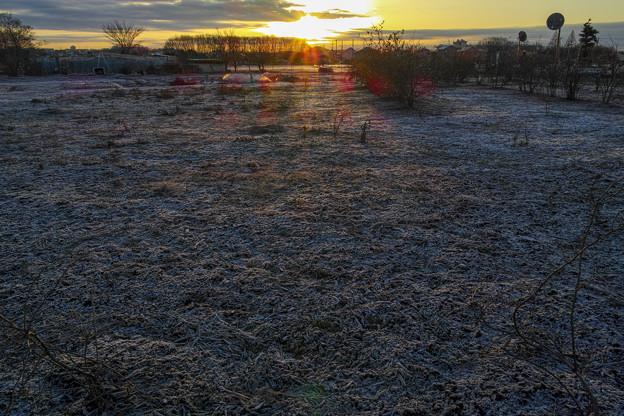 霜柱の王国