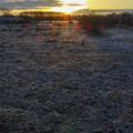 Photos: 霜柱の王国