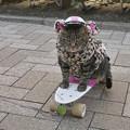 猫サーフボーダー@江ノ島
