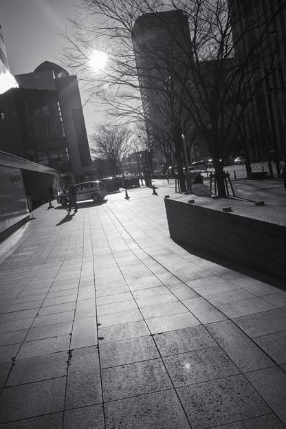 Photos: 冬の日溜まり