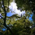 写真: 新緑の季節が待ち遠しい