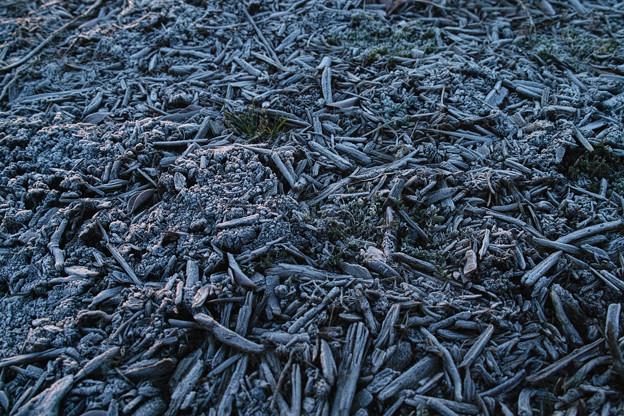 霜柱の干物、、