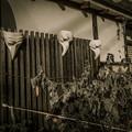 写真: 仮面舞踏会をやる寿司屋か、、(爆)