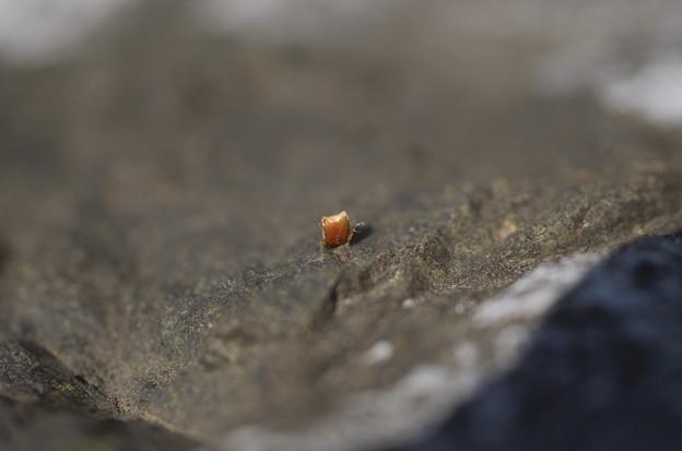 岩から芽生えた根性植物
