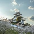 写真: 掛川城の桜