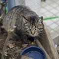 Photos: 近所の野良ちゃん、、