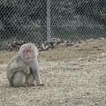Photos: 考える猿