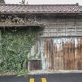 Photos: 錆と蔦