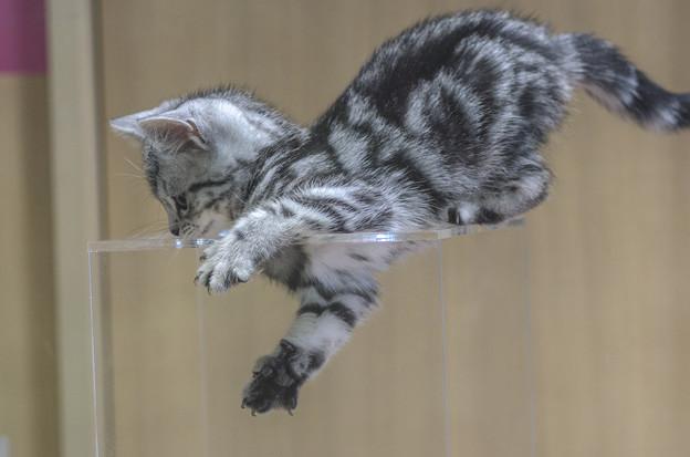 空中浮遊猫(違)