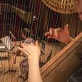 Photos: 僕の居る鍵盤の位置からは、Harpを通して客席が透けて見えて居るのです