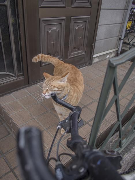 Photos: ハンドルフェチ