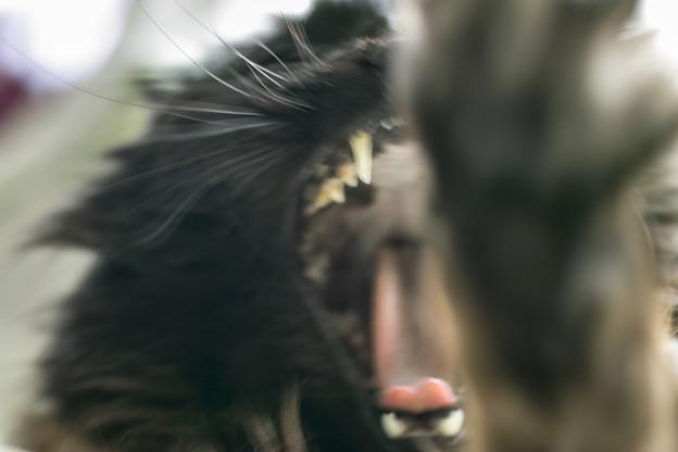 猫にやられるネズミの視点(爆)