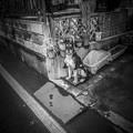 Photos: なんかシリーズ化の予感(爆)