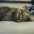 Photos: 褪色猫