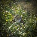 草むらで寛ぐ野良猫さん