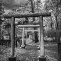 Photos: 異界への入口