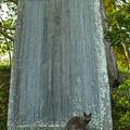 Photos: 石碑と猫