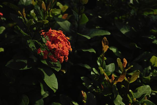Photos: あまり見かけない花だな
