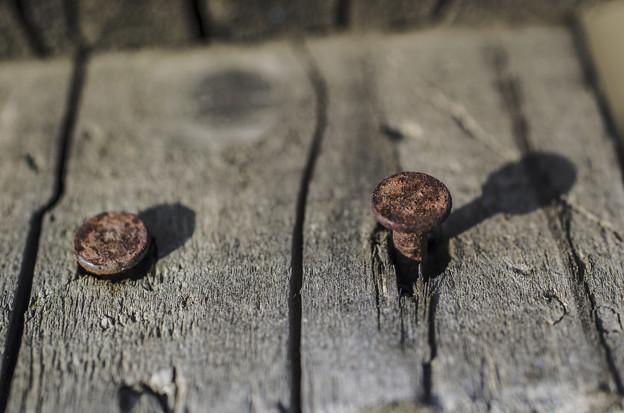 Photos: 出る杭は打たれるより影が綺麗(爆)